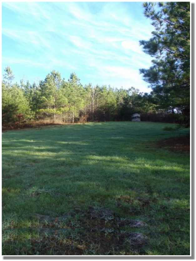 Timber land for sale in Georgia