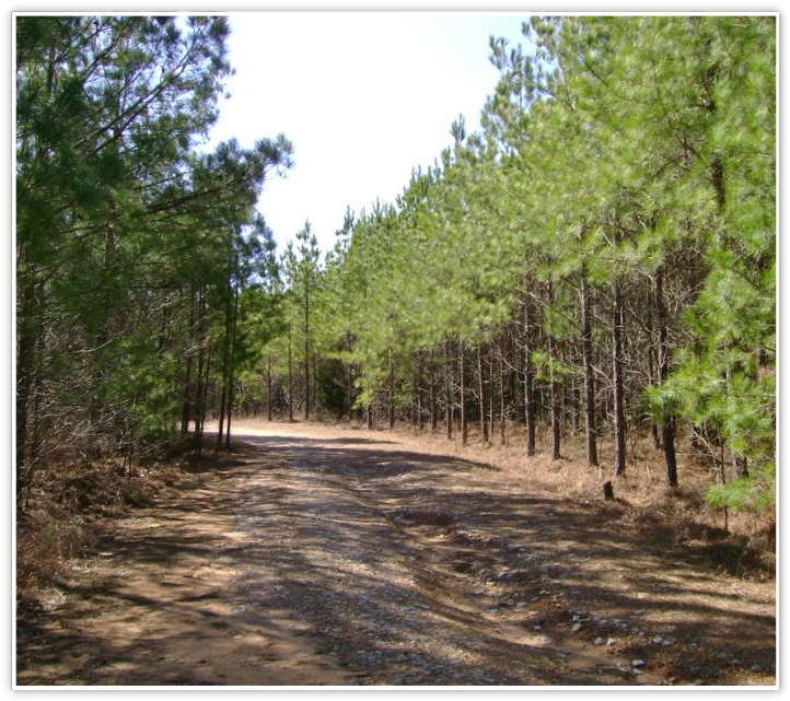 Hunting Land for Sale Georgia